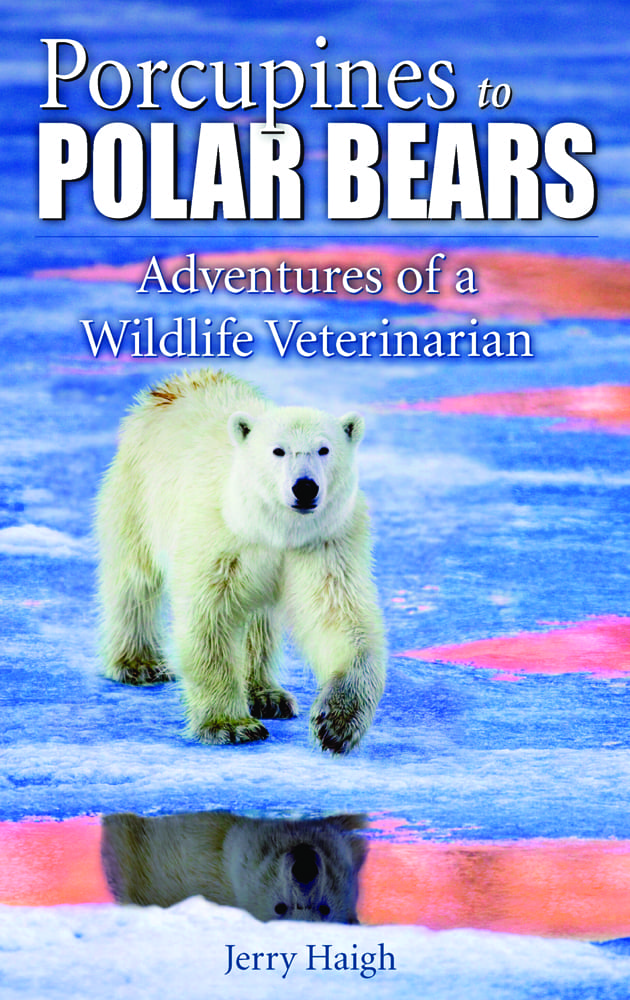 Porcupines to Polar Bears